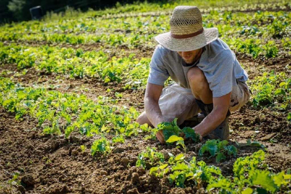 contadino che raccoglie verdure