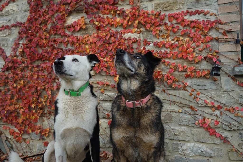 due cani ospiti del rifugio riot dog