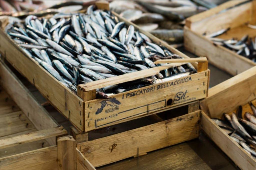 pesce azzurro è tra le materie prime delle crocchette per cani di feed-0