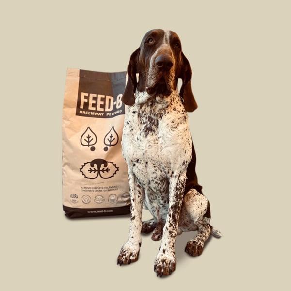 bracco con sacco di feed-0