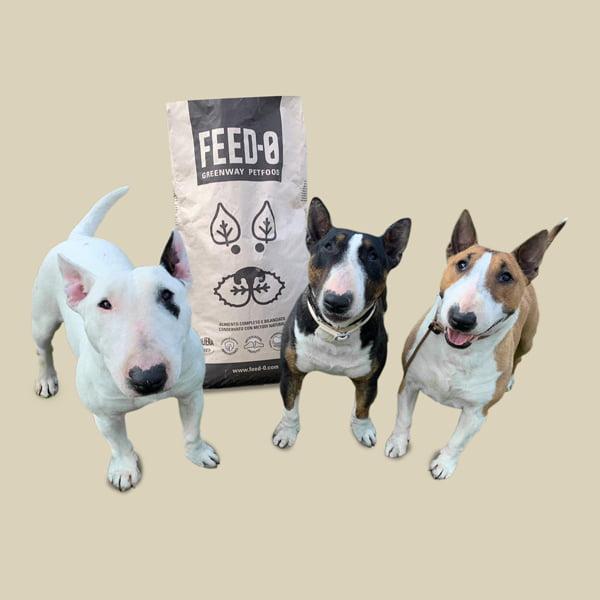 bull terrier e sacco di crocchette per cani feed-0