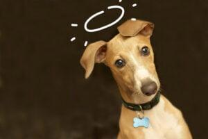 La leggenda di San Guinefort - Il cane santo