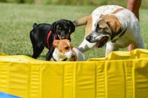 cuccioli in una puppy class all'orma del lupo