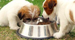 meglio cibo per cani umido o secco