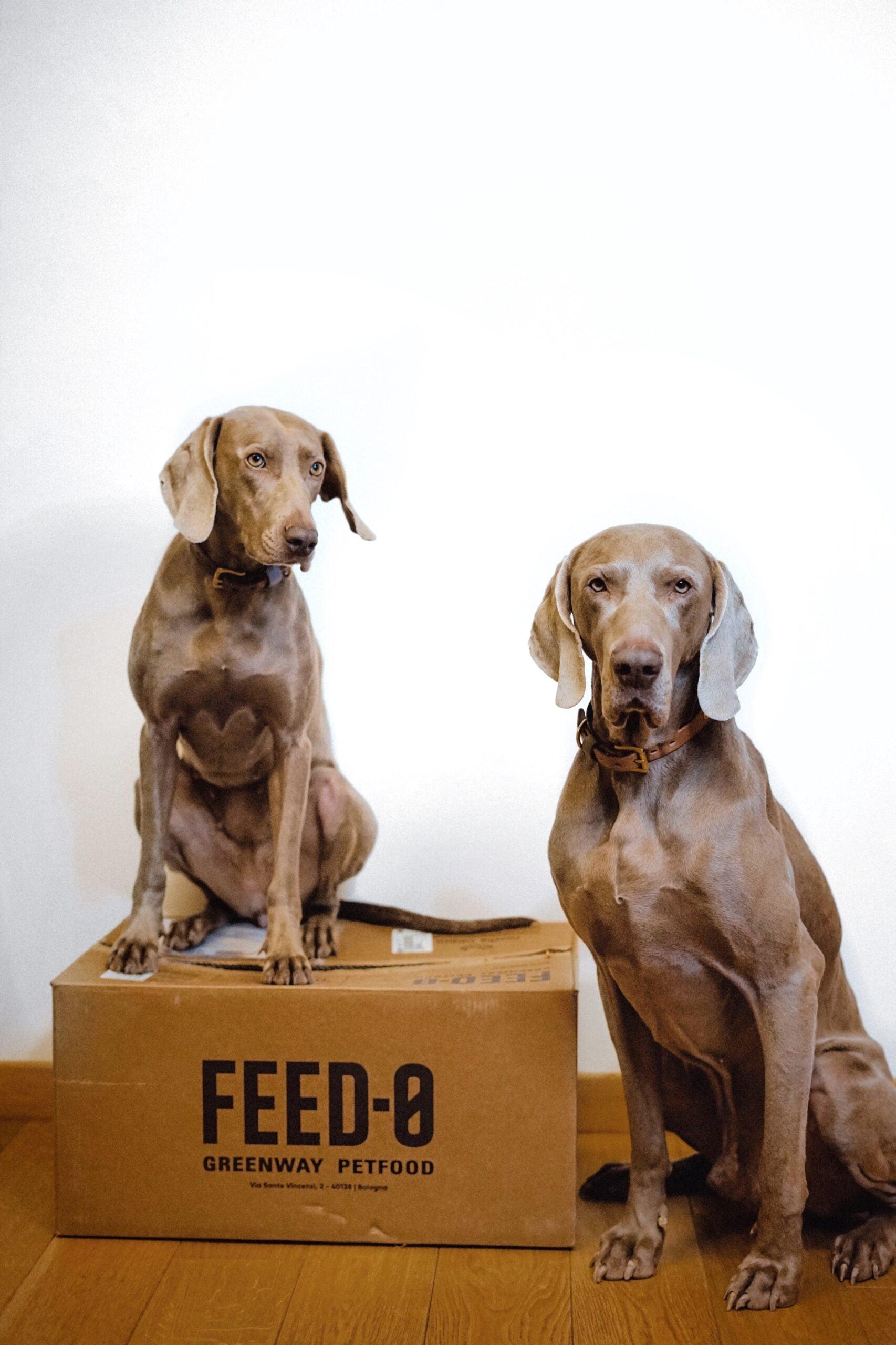 Pippo e Bella