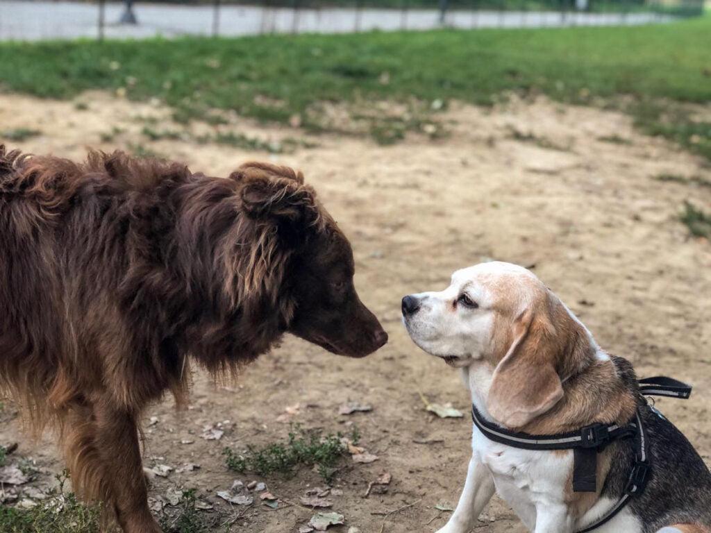 I-canali-comunicativi-del-nostro-cane