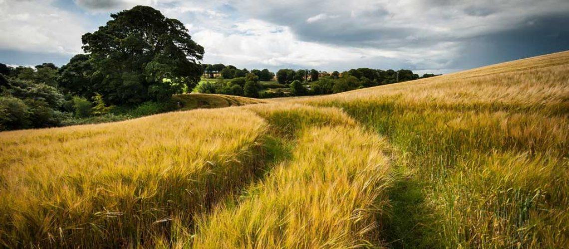 campo di grano, i prodotti di feed-0 sono filiera corta